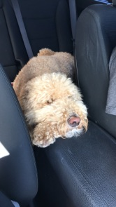 Realizing he'd be in the back seat for a while.